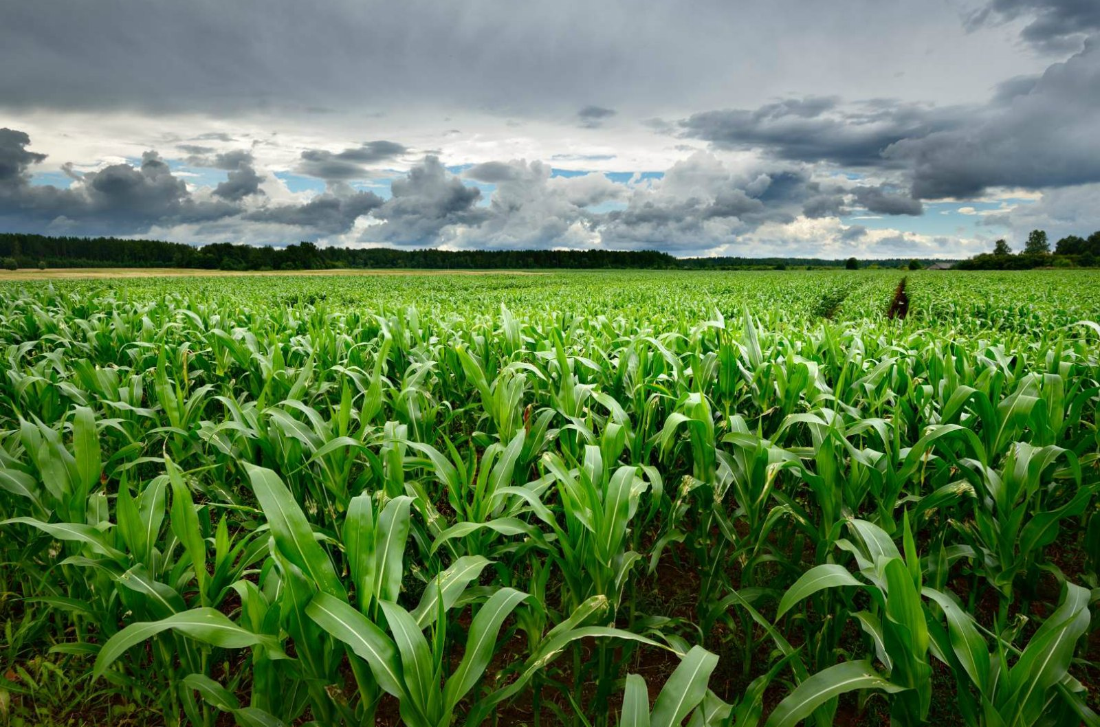 Green Power of Centia Moves Biofuel Energy Closer to Reality
