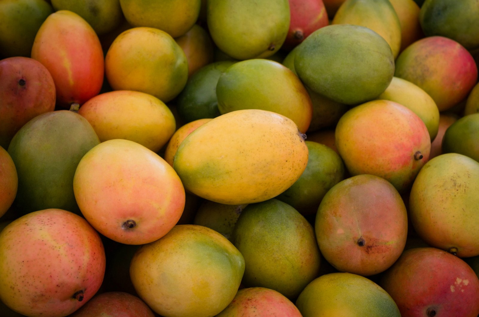 Converting Mango Waste Into Valuable Products