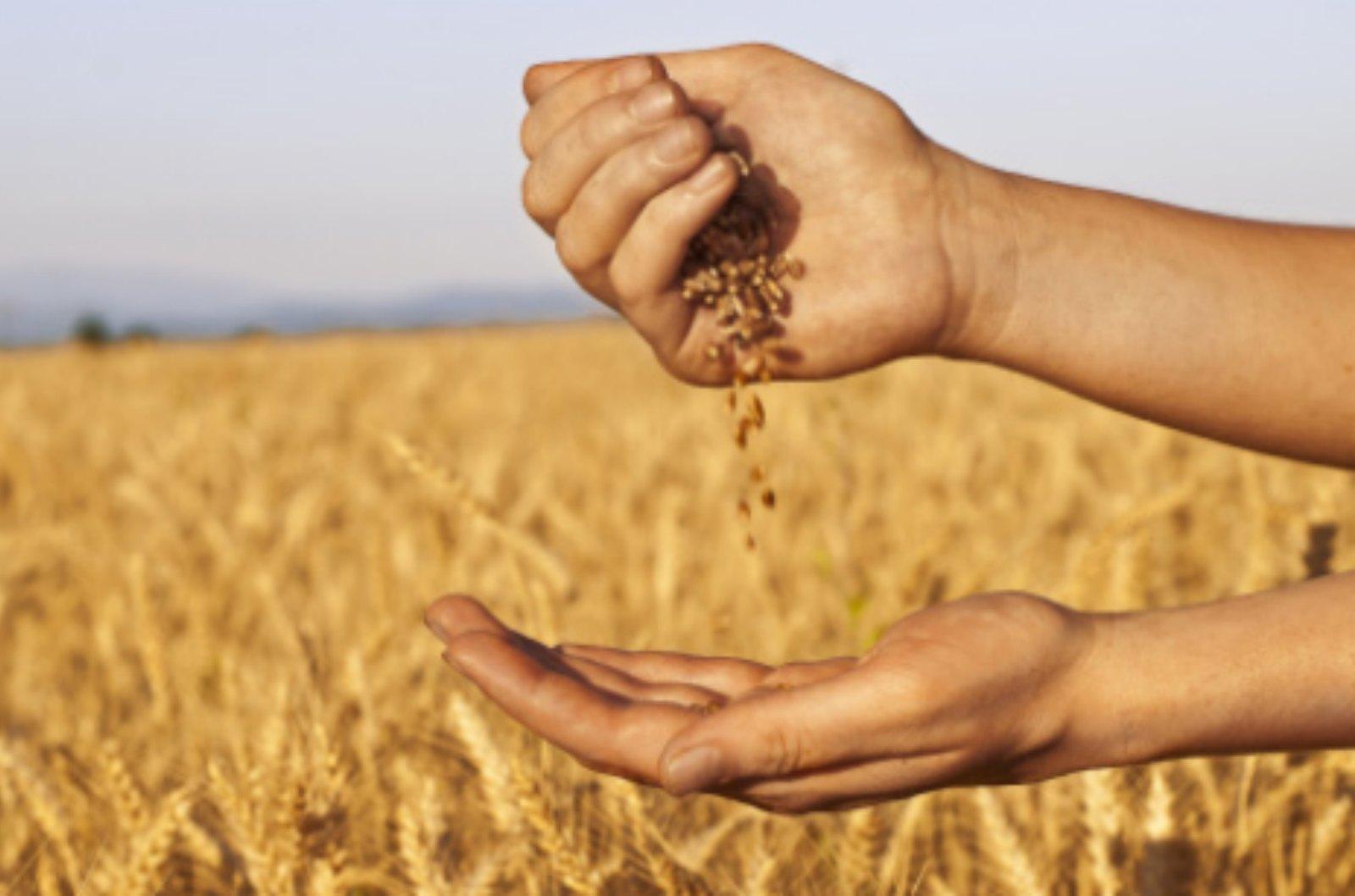 Dried Oats Yield New Opportunities