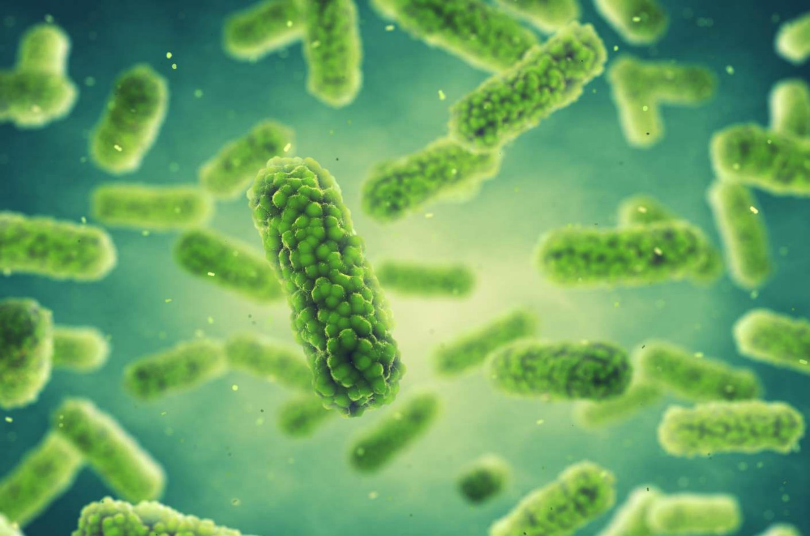 DNA Microarray Rapidly Profiles Microbial Populations
