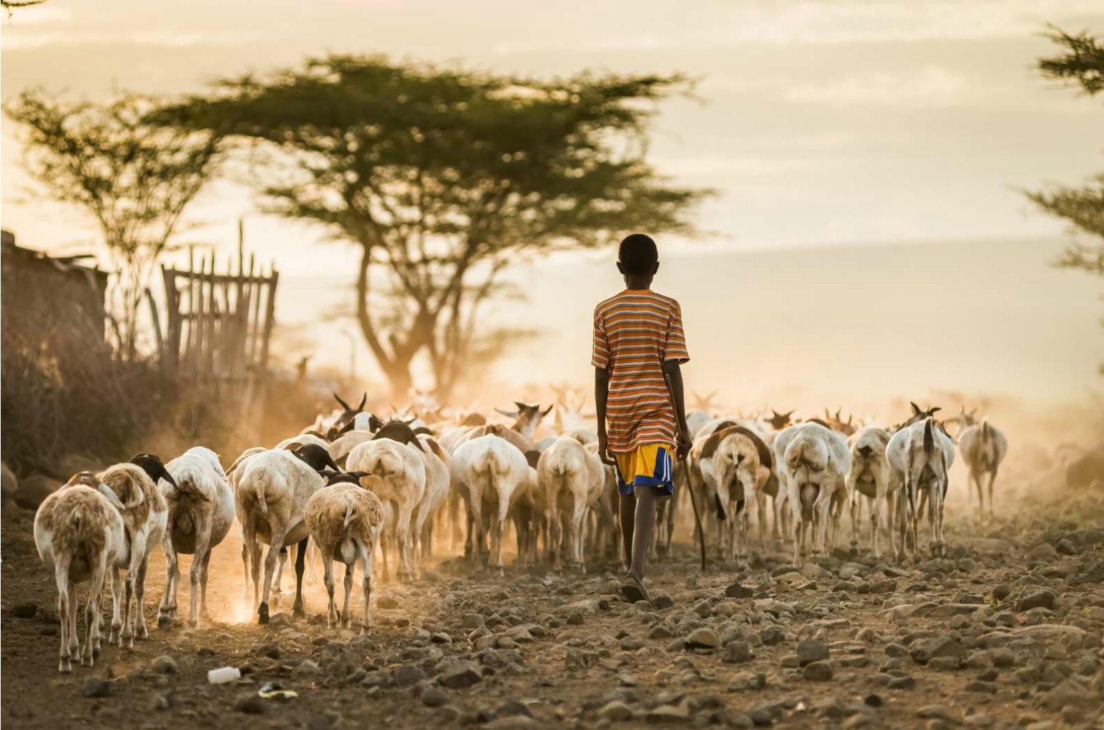 Diagnostic Breakthrough Unmasks a Killer in Sub-Saharan Africa