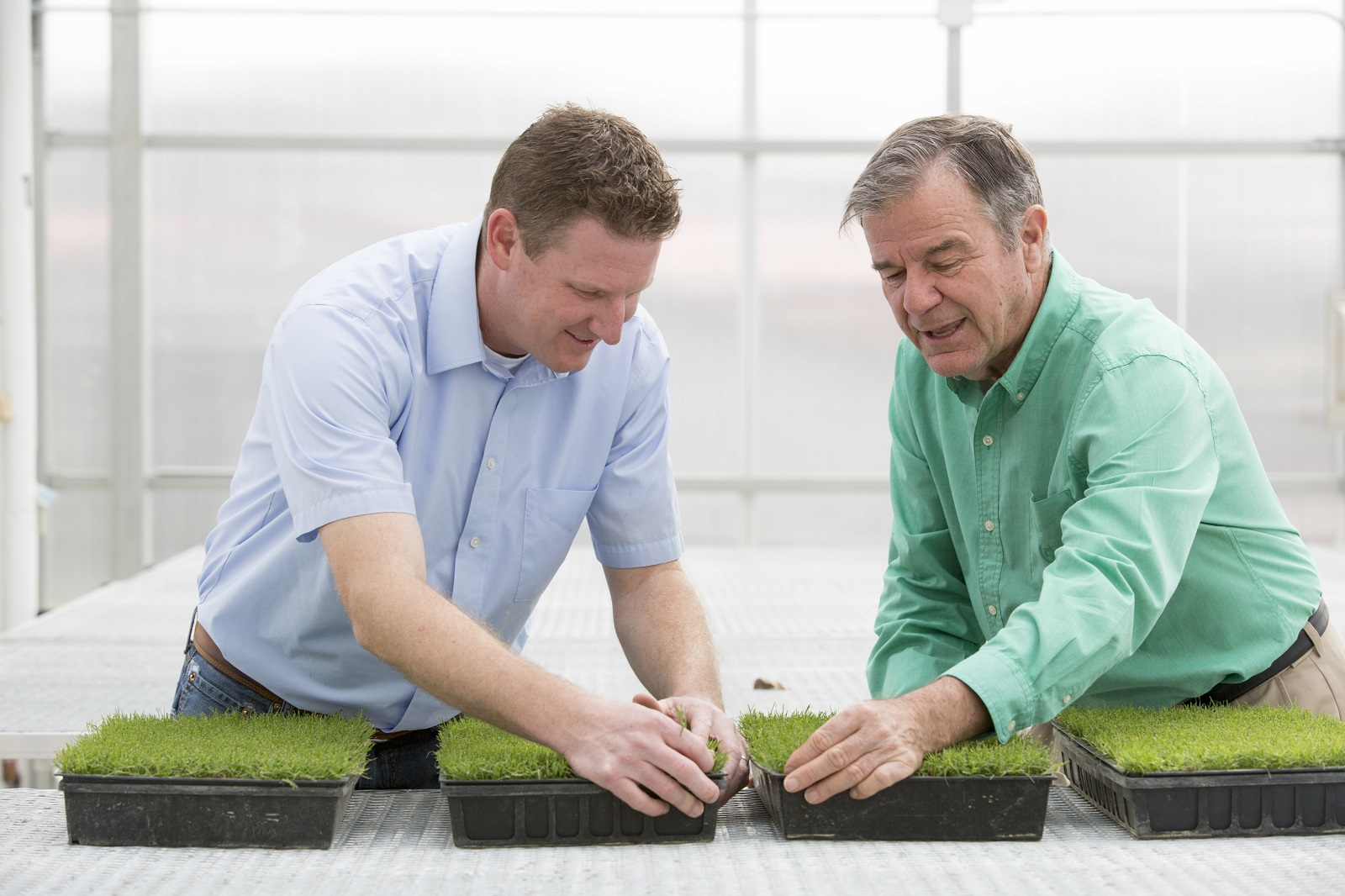 TifTuf Bermudagrass's Growth Impresses Licensees
