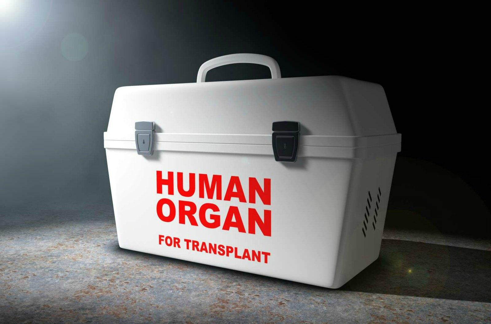 Researchers Improve Storage forTransplant Organs